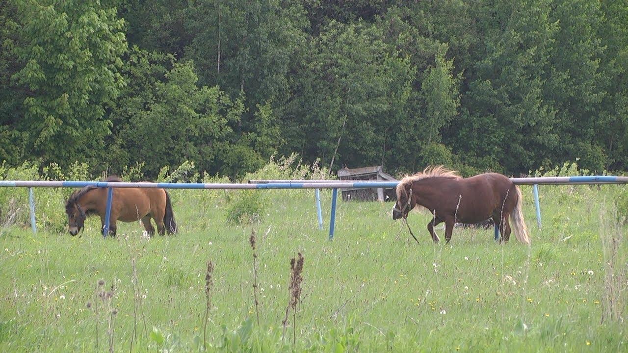 Пони исчезают полностью? Детектив с непарнокопытной неизвестной