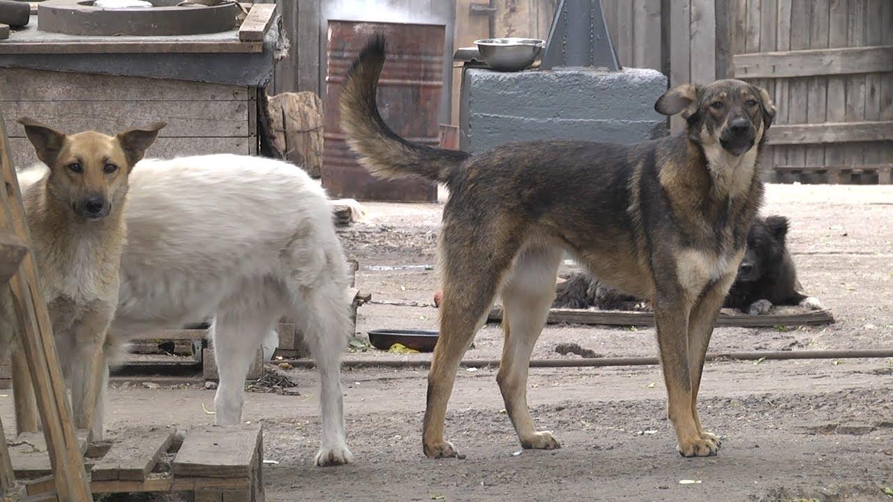 Землю — собакам! В России не хватает приютов для животных