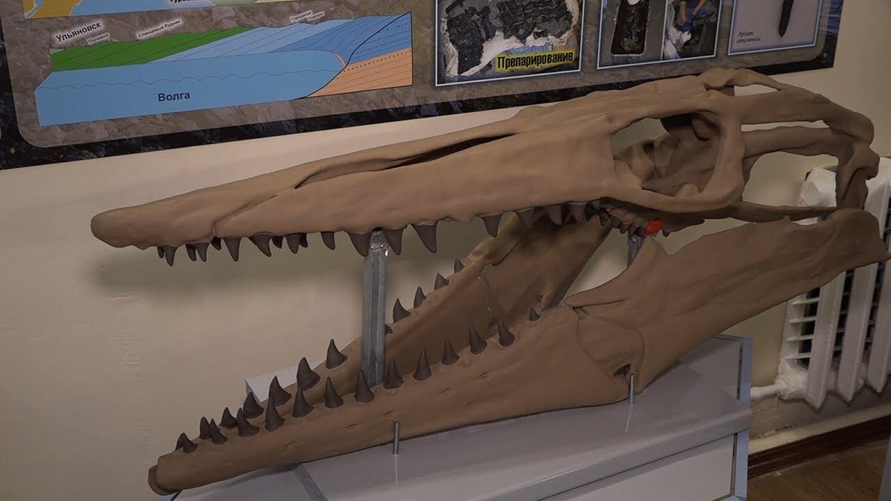 Ихтиозавры из пластика. Ундоровский палеонтологический музей обзавёлся современной лабораторией