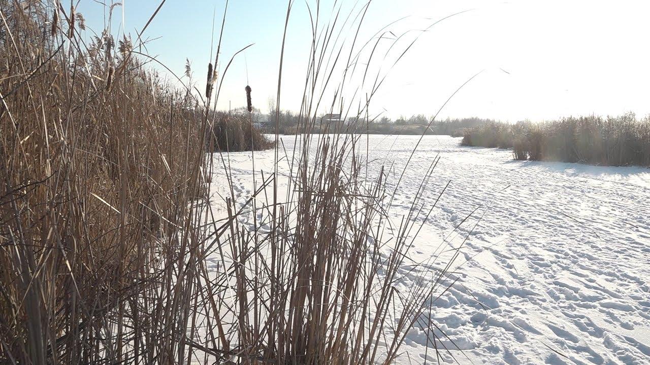 План развития без пруда. Продолжение истории на Шолмова
