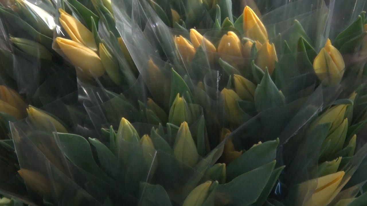 Солнышко в цветах. Символ весны